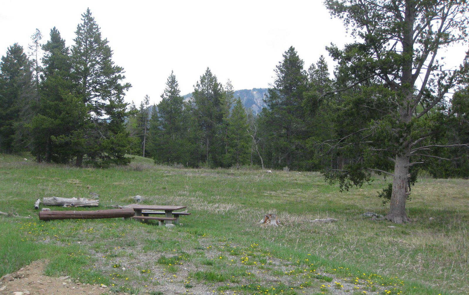 Site B10, campsite surrounded by pine trees, picnic table & fire ringSite B10