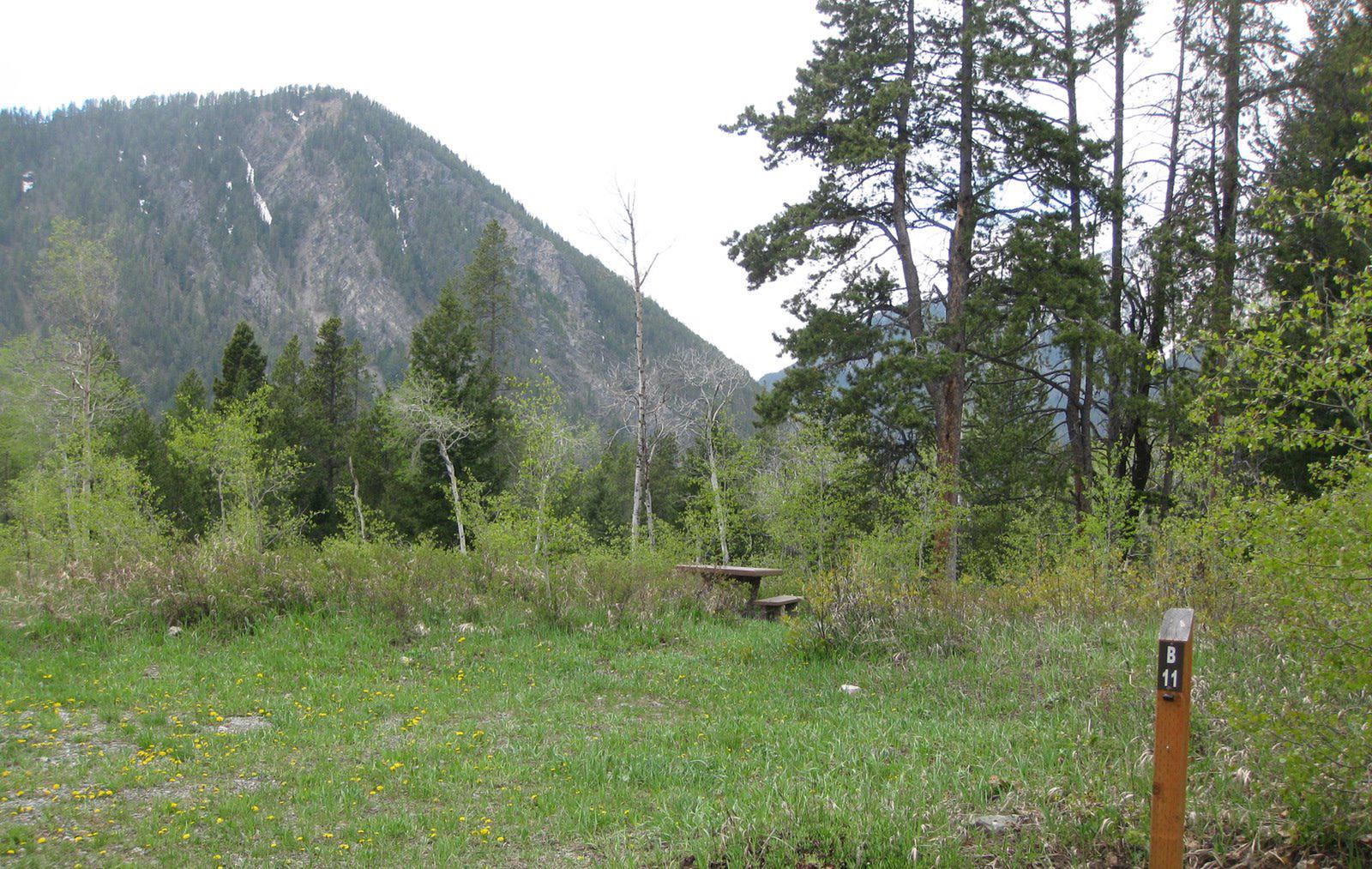 Site B11, campsite surrounded by pine trees, picnic table & fire ringSite B11