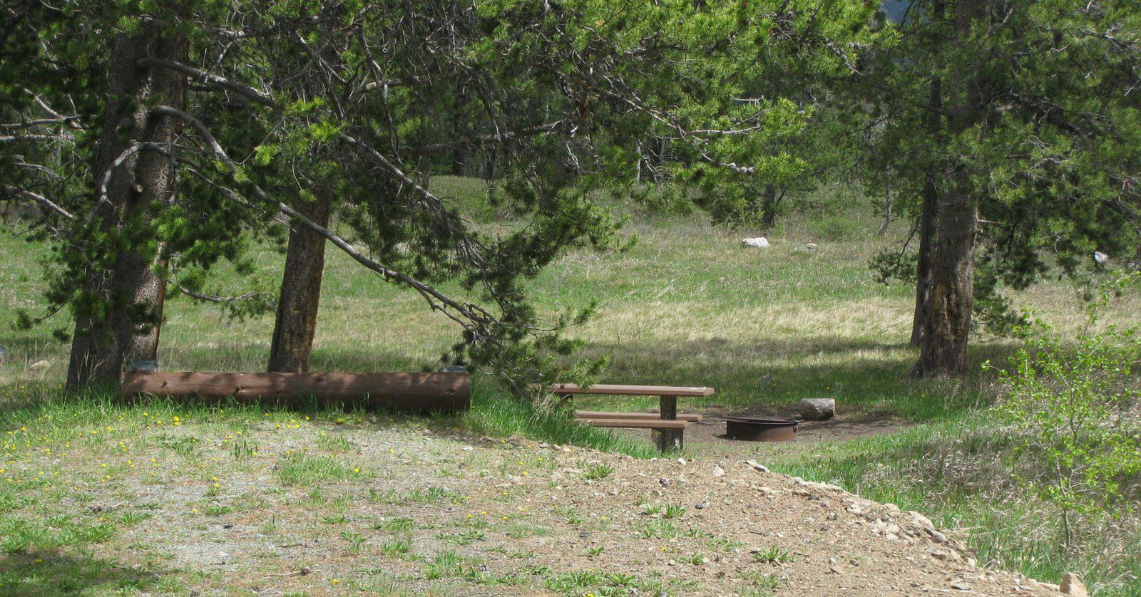 Site B12, campsite surrounded by pine trees, picnic table & fire ringSite B12