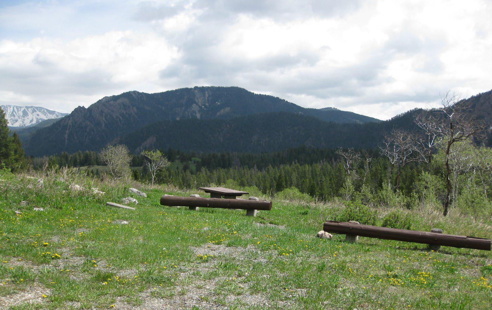 Site B13, campsite surrounded by pine trees, picnic table & fire ringSite B13