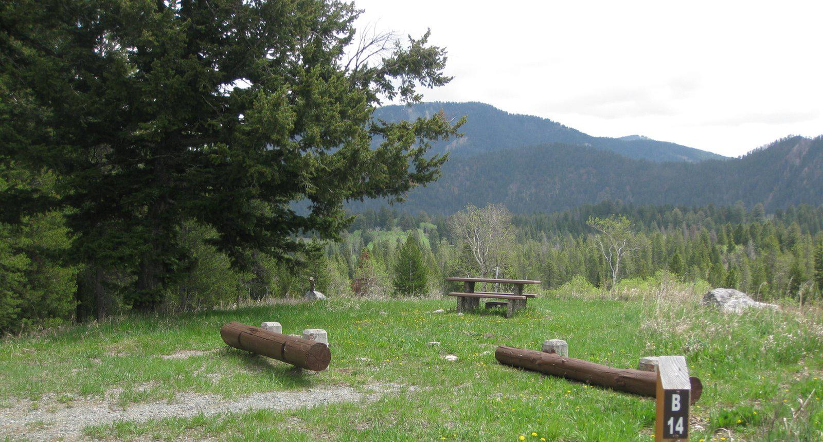 Site B14, campsite surrounded by pine trees, picnic table & fire ringSite B14