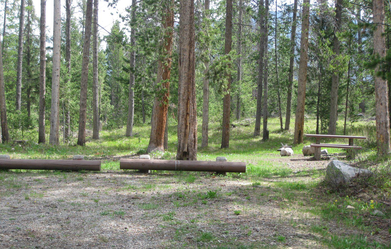 Site B2, campsite surrounded by pine trees, picnic table & fire ringSite B2