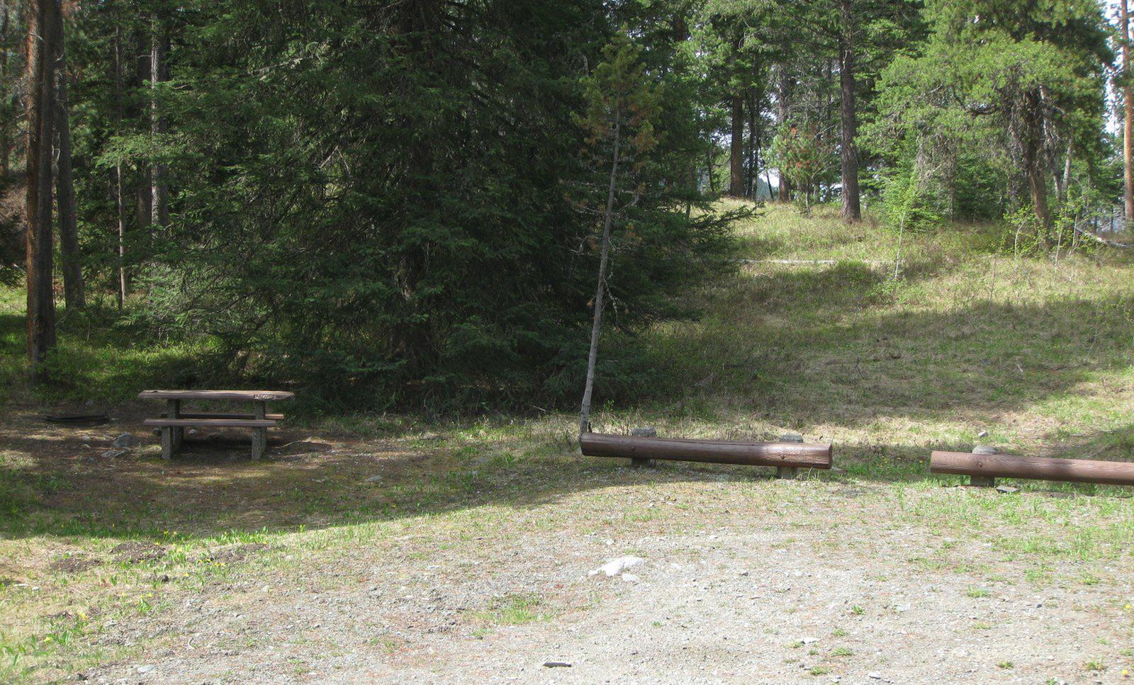 Site B3, campsite surrounded by pine trees, picnic table & fire ringSite B3