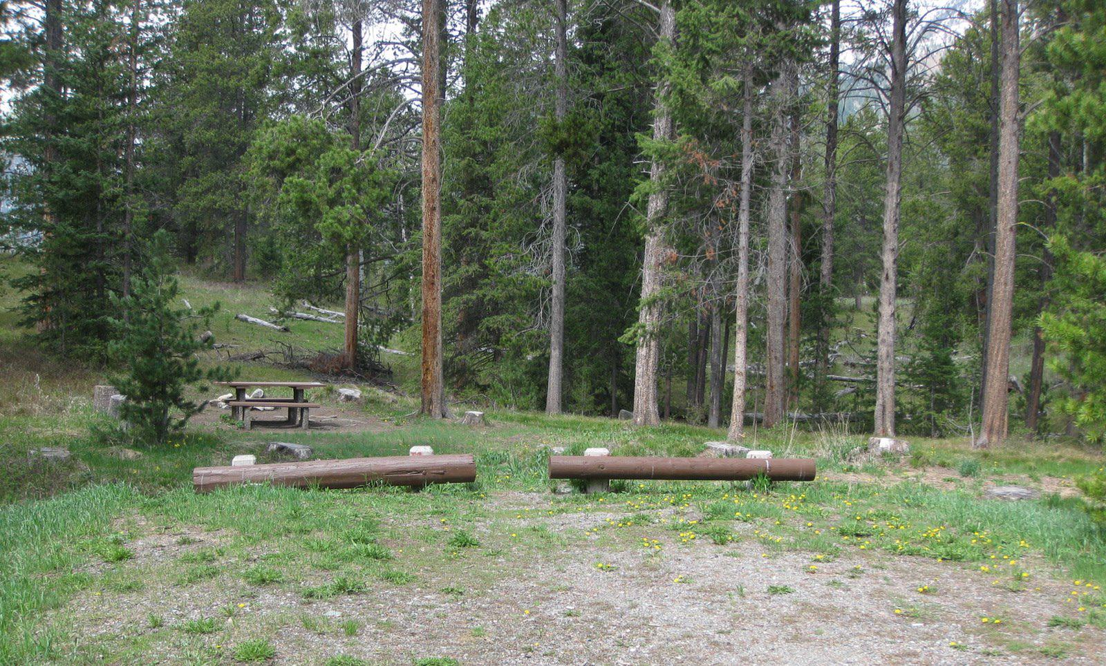 Site B5, campsite surrounded by pine trees, picnic table & fire ringSite B5