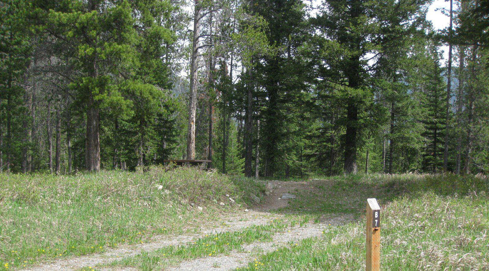 Site B7, campsite surrounded by pine trees, picnic table & fire ringSite B7