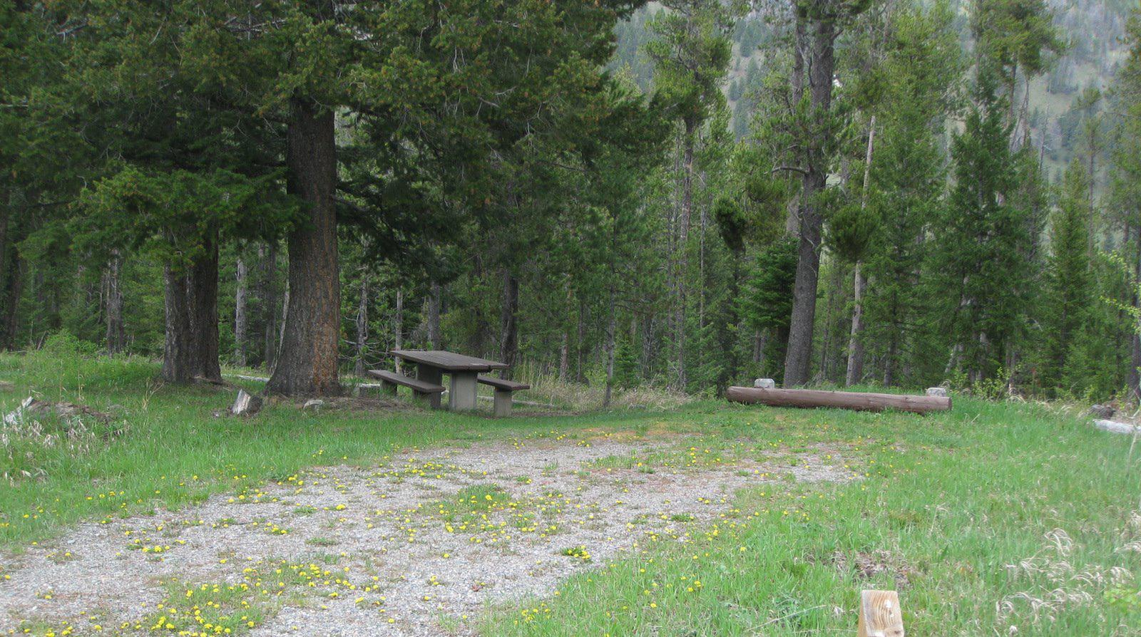 Site B8, campsite surrounded by pine trees, picnic table & fire ringSite B8