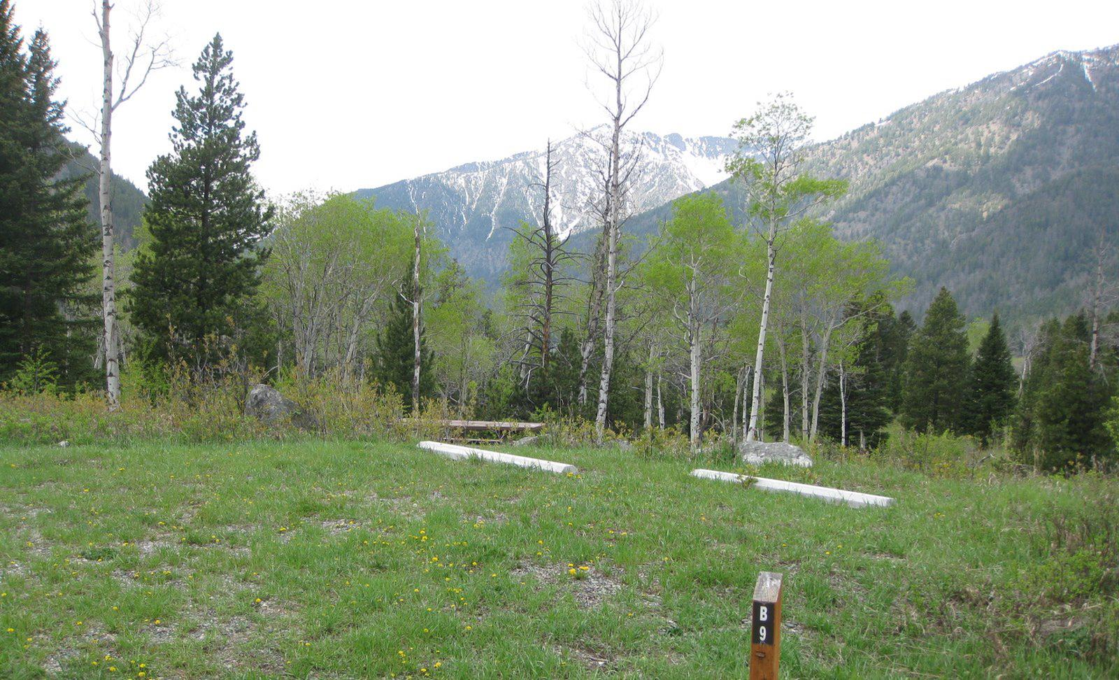 Site B9, campsite surrounded by pine trees, picnic table & fire ringSite B9