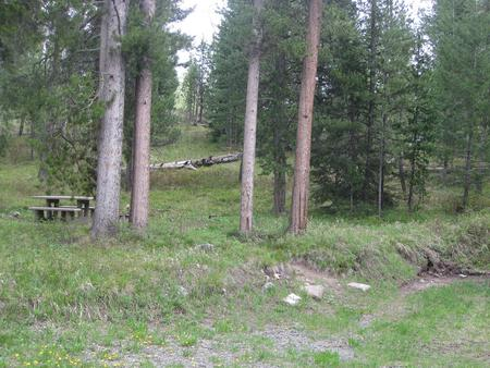 Site C10, campsite surrounded by pine trees, picnic table & fire ringSite C10