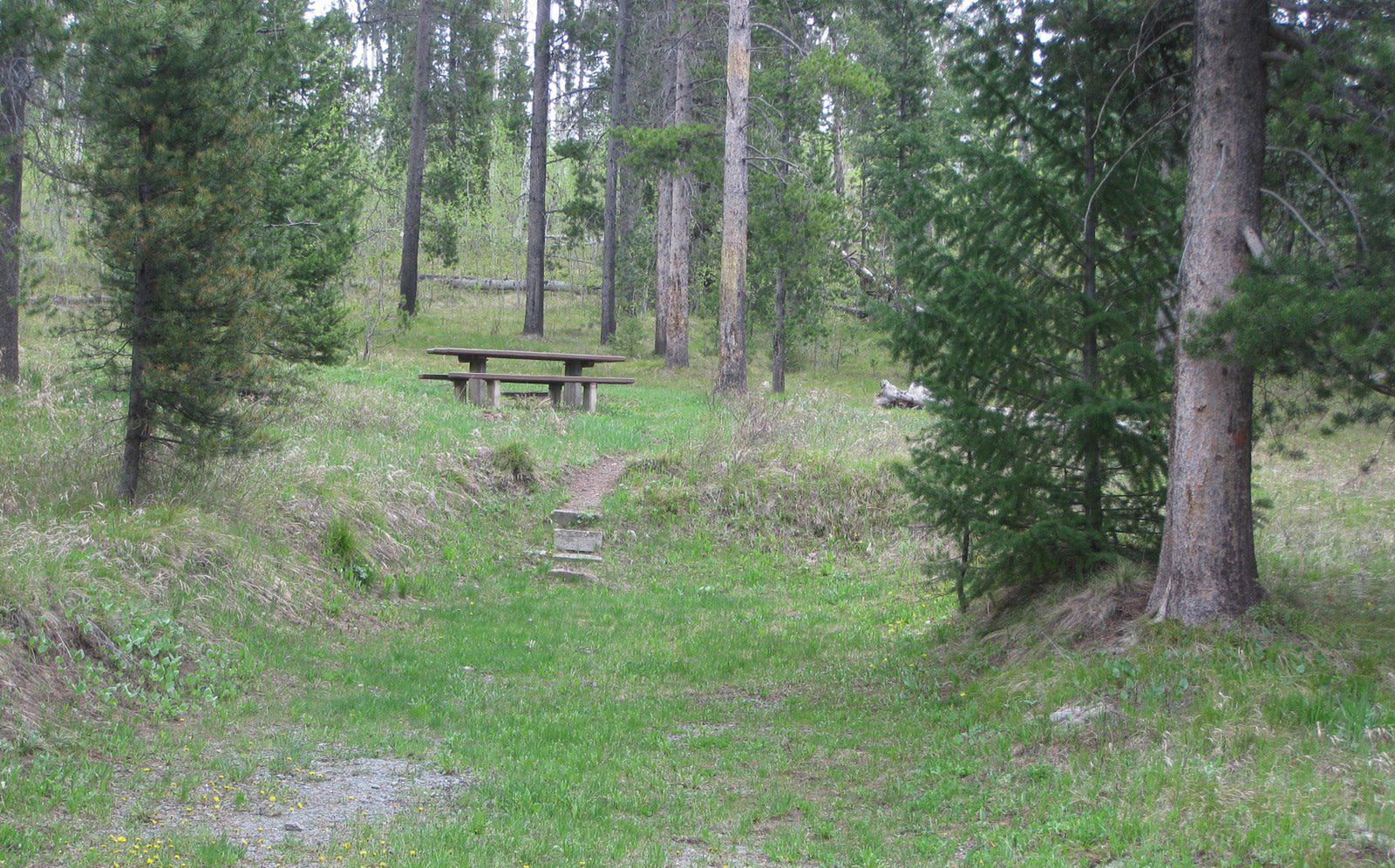 Site C11, campsite surrounded by pine trees, picnic table & fire ringSite C11