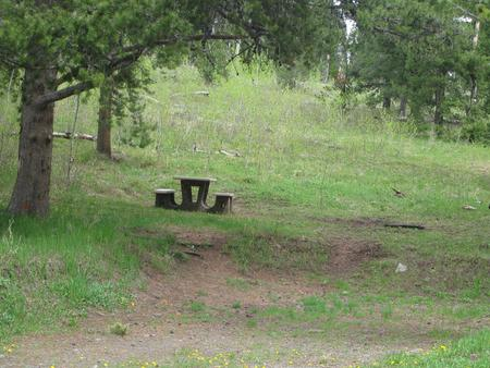 Site C12, campsite surrounded by pine trees, picnic table & fire ringSite C12