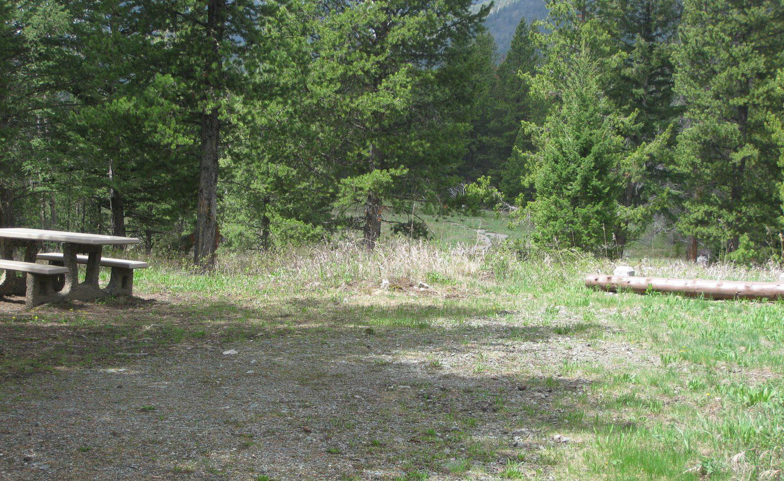 Site C13, campsite surrounded by pine trees, picnic table & fire ringSite C13