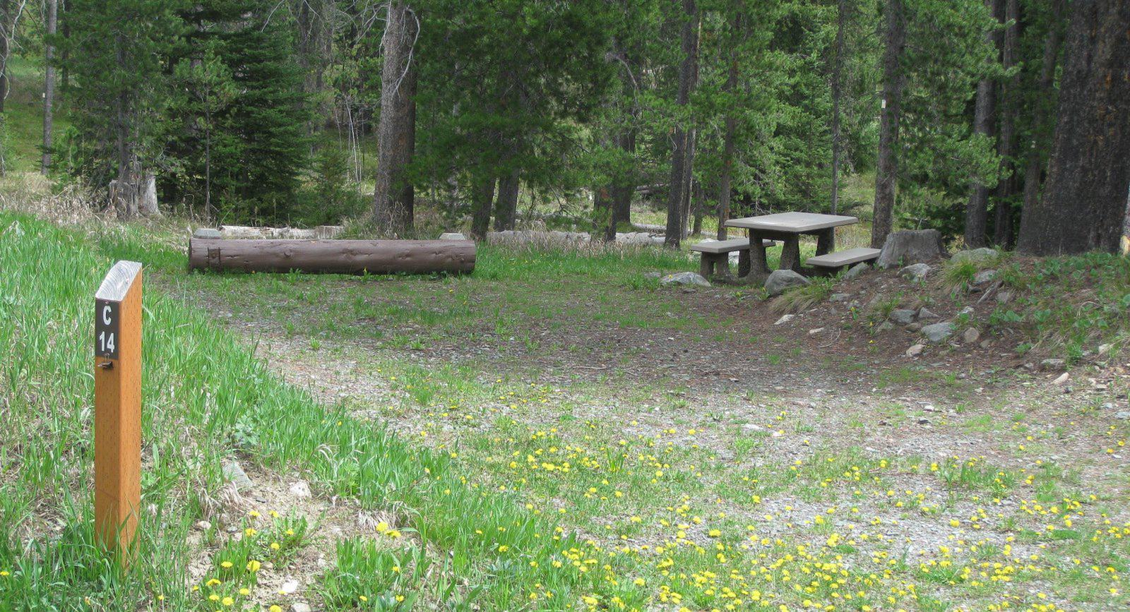 Site C14, campsite surrounded by pine trees, picnic table & fire ringSite C14