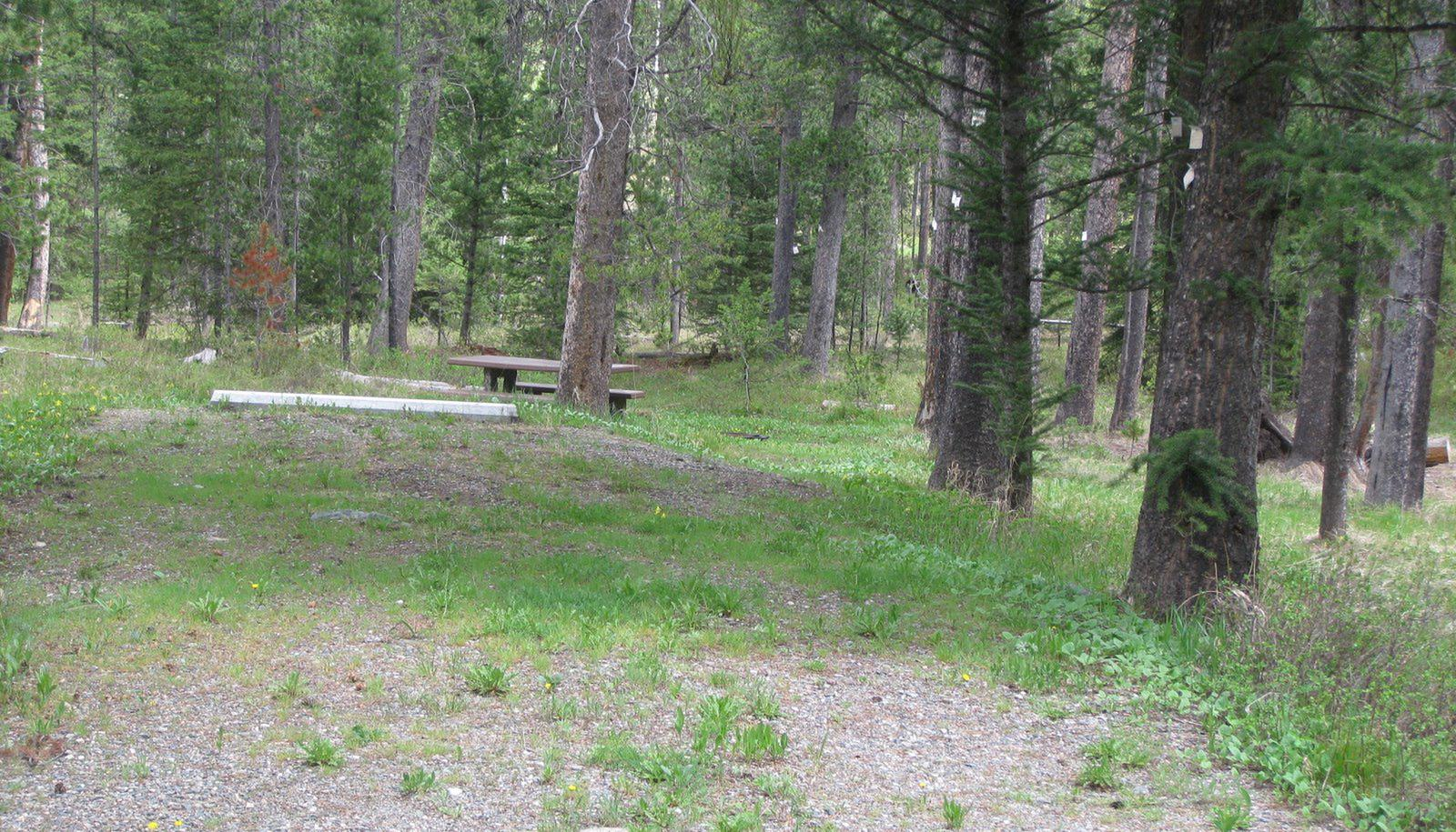 Site C16, campsite surrounded by pine trees, picnic table & fire ringSite C16