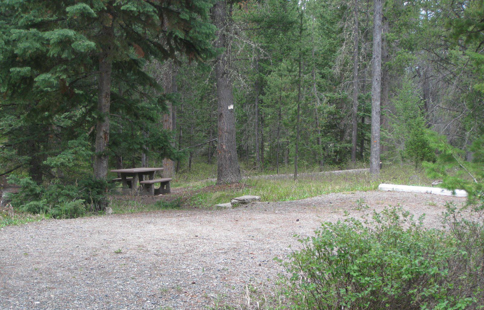 Site C17, campsite surrounded by pine trees, picnic table & fire ringSite C17