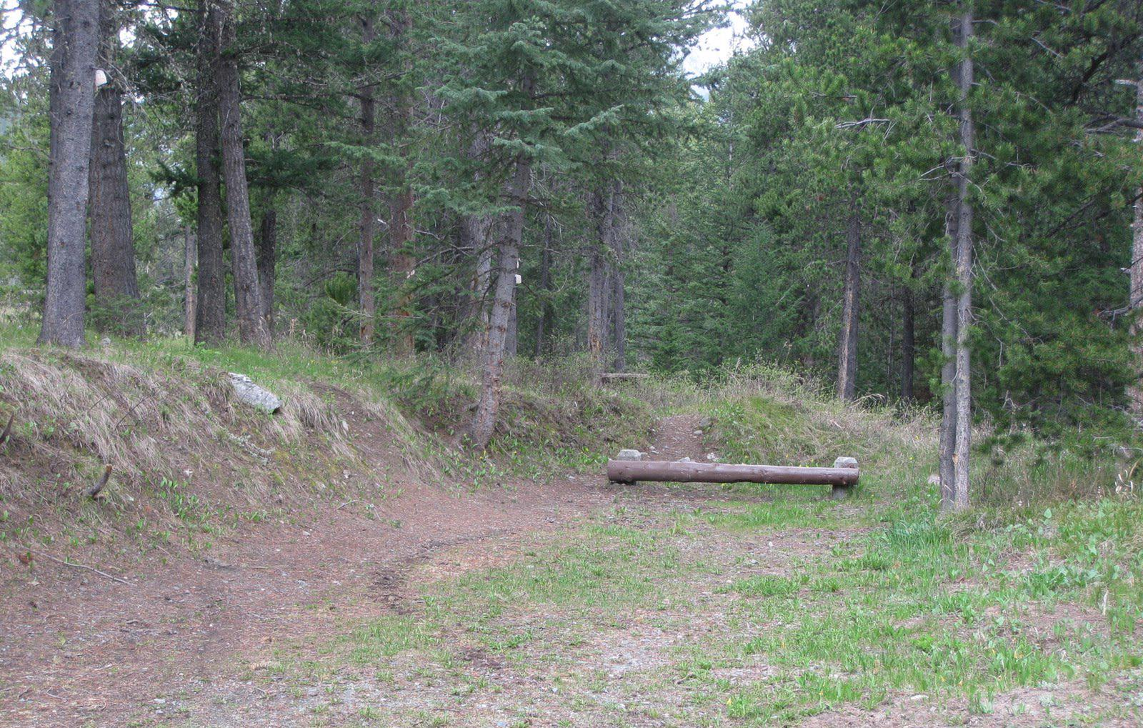 Site C18, campsite surrounded by pine trees, picnic table & fire ringSite C18