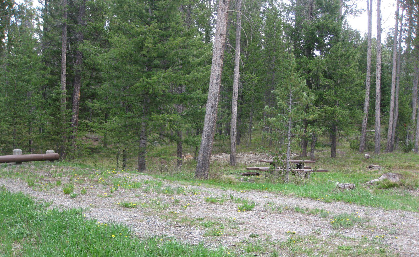 Site C19, campsite surrounded by pine trees, picnic table & fire ringSite C19