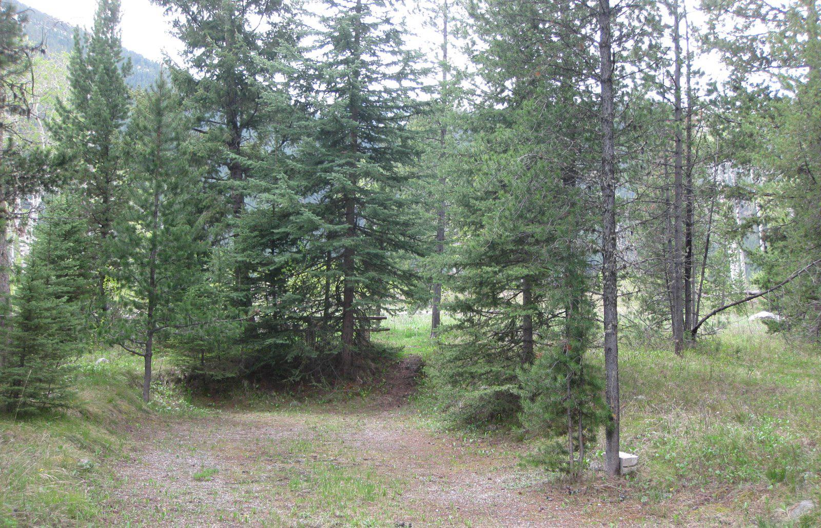 Site C2, campsite surrounded by pine trees, picnic table & fire ringSite C2