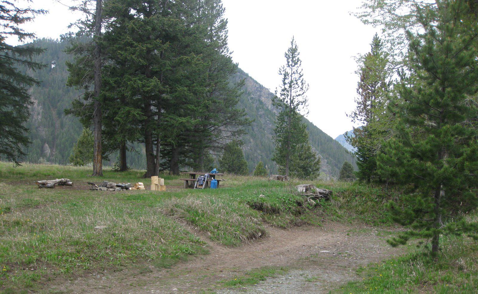 Site C20, campsite surrounded by pine trees, picnic table & fire ringSite C20