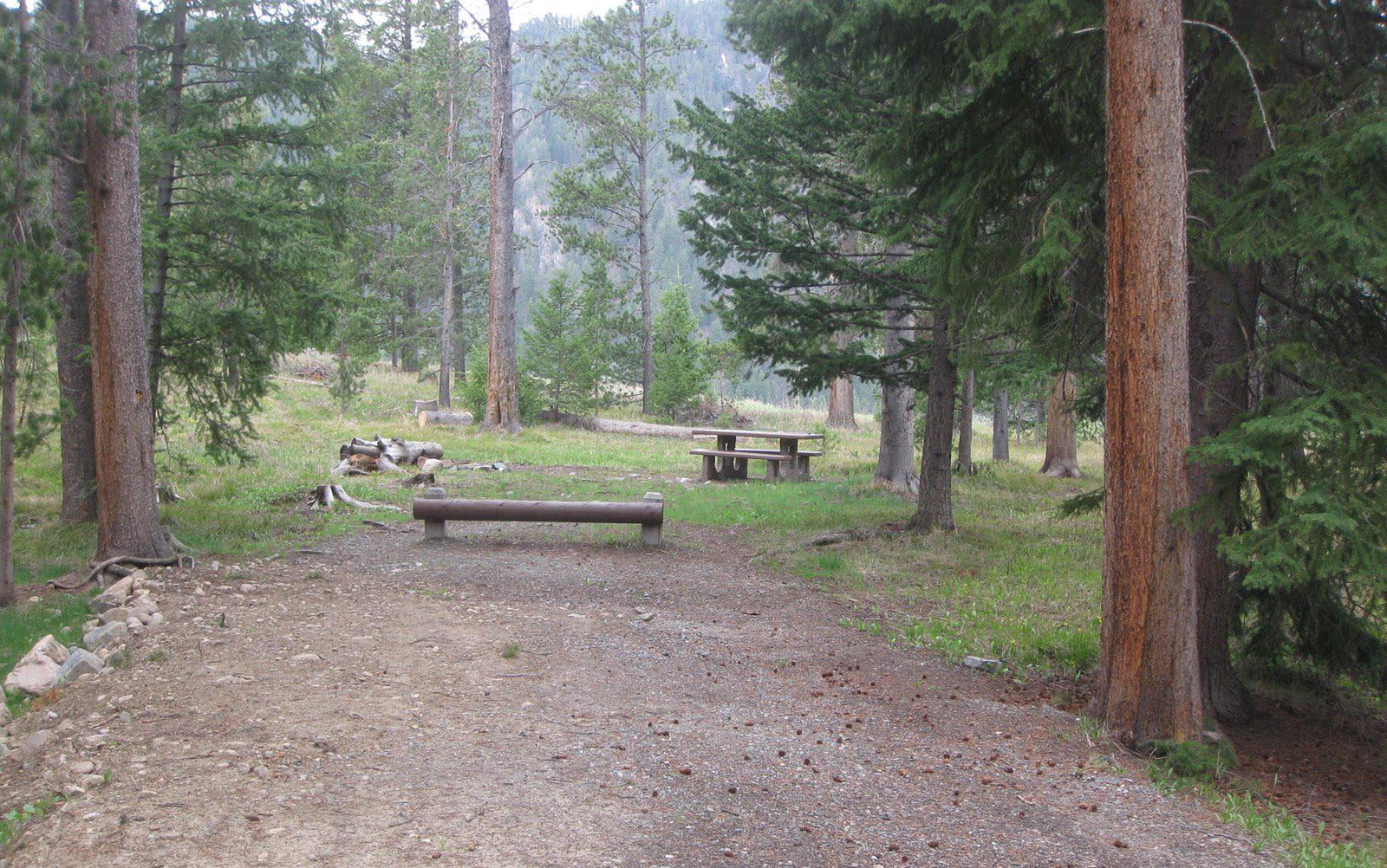 Site C21, campsite surrounded by pine trees, picnic table & fire ringSite C21