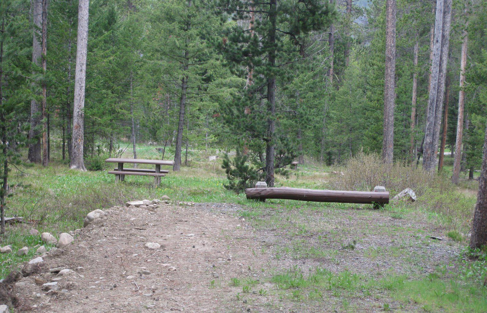 Site C22, campsite surrounded by pine trees, picnic table & fire ringSite C22