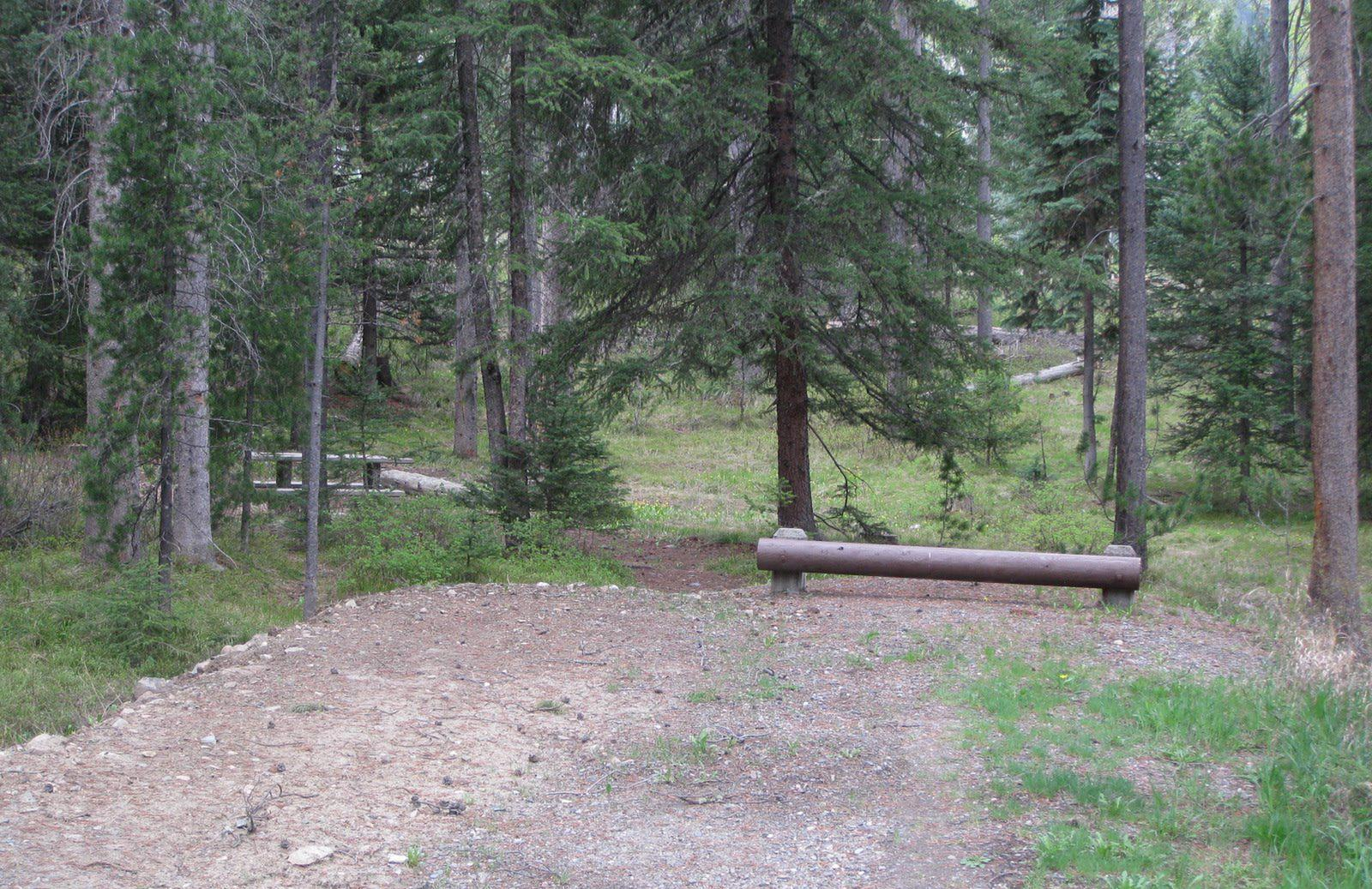 Site C23, campsite surrounded by pine trees, picnic table & fire ringSite C23
