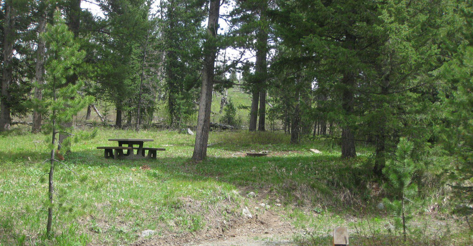 Site C3, campsite surrounded by pine trees, picnic table & fire ringSite C3