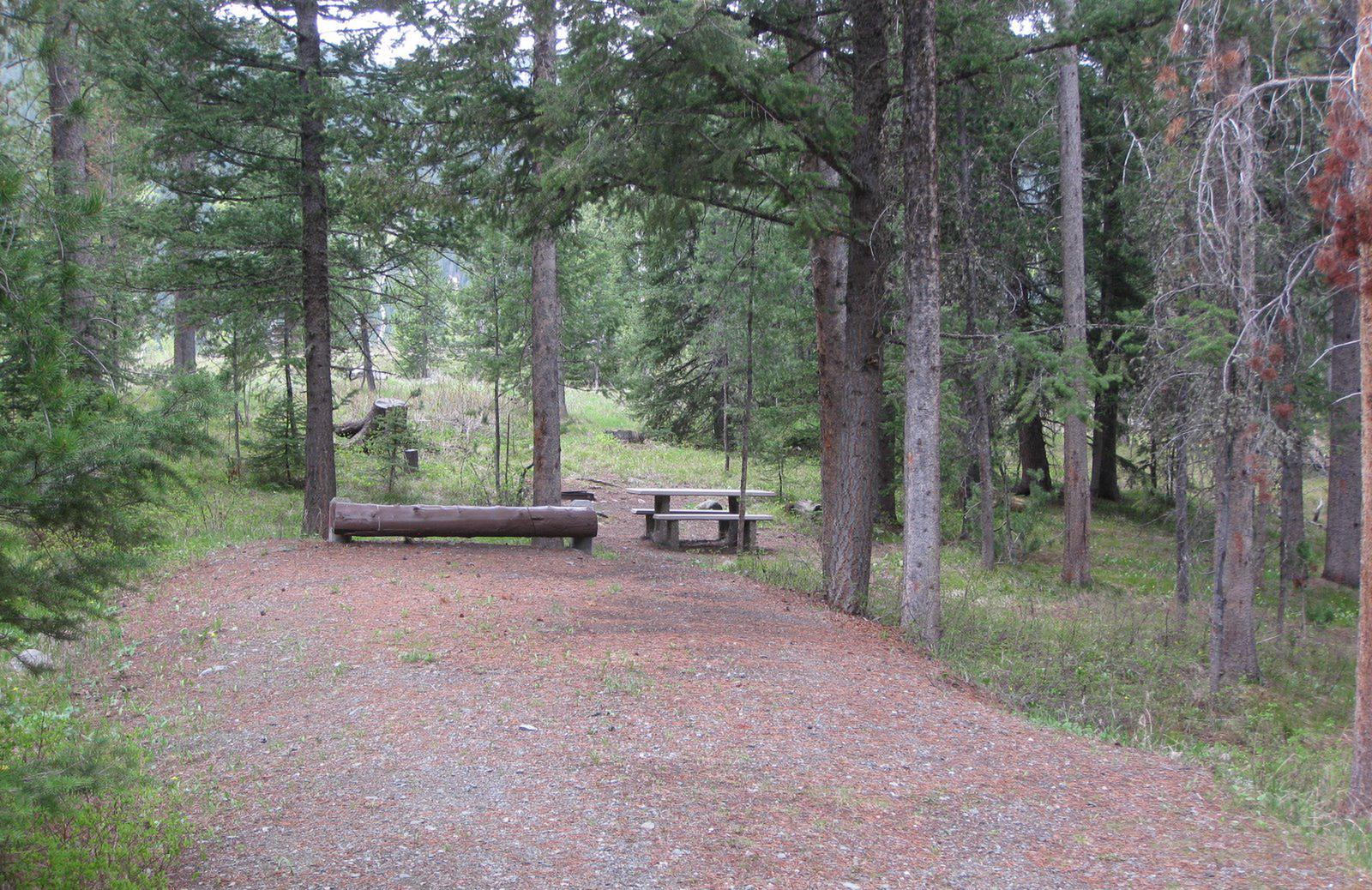 Site C4, campsite surrounded by pine trees, picnic table & fire ringSite C4