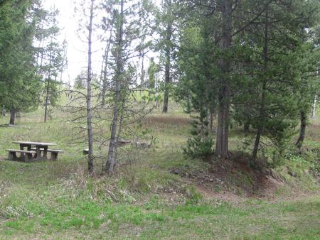 Site C6, campsite surrounded by pine trees, picnic table & fire ringSite C6
