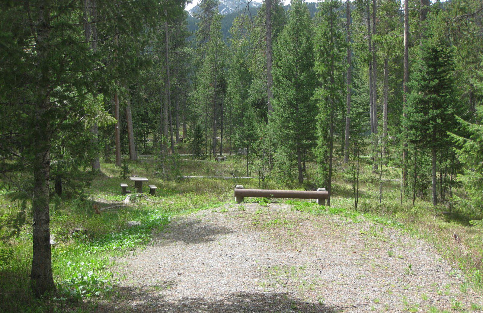 Site C7, campsite surrounded by pine trees, picnic table & fire ringSite C7