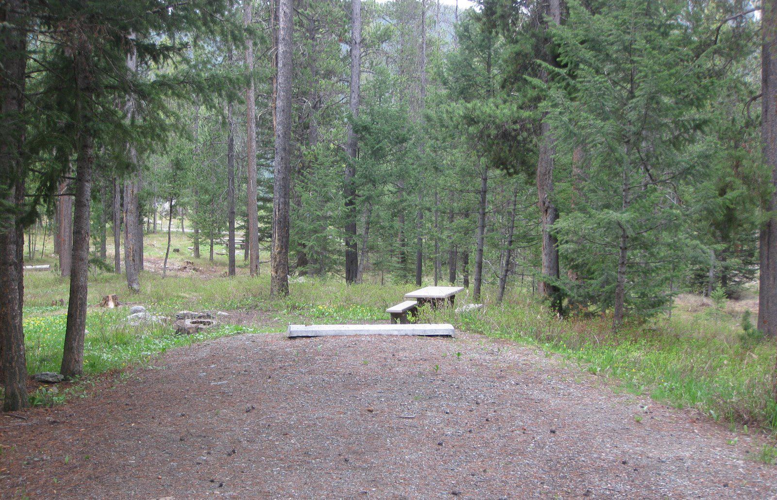 Site C8, campsite surrounded by pine trees, picnic table & fire ringSite C8