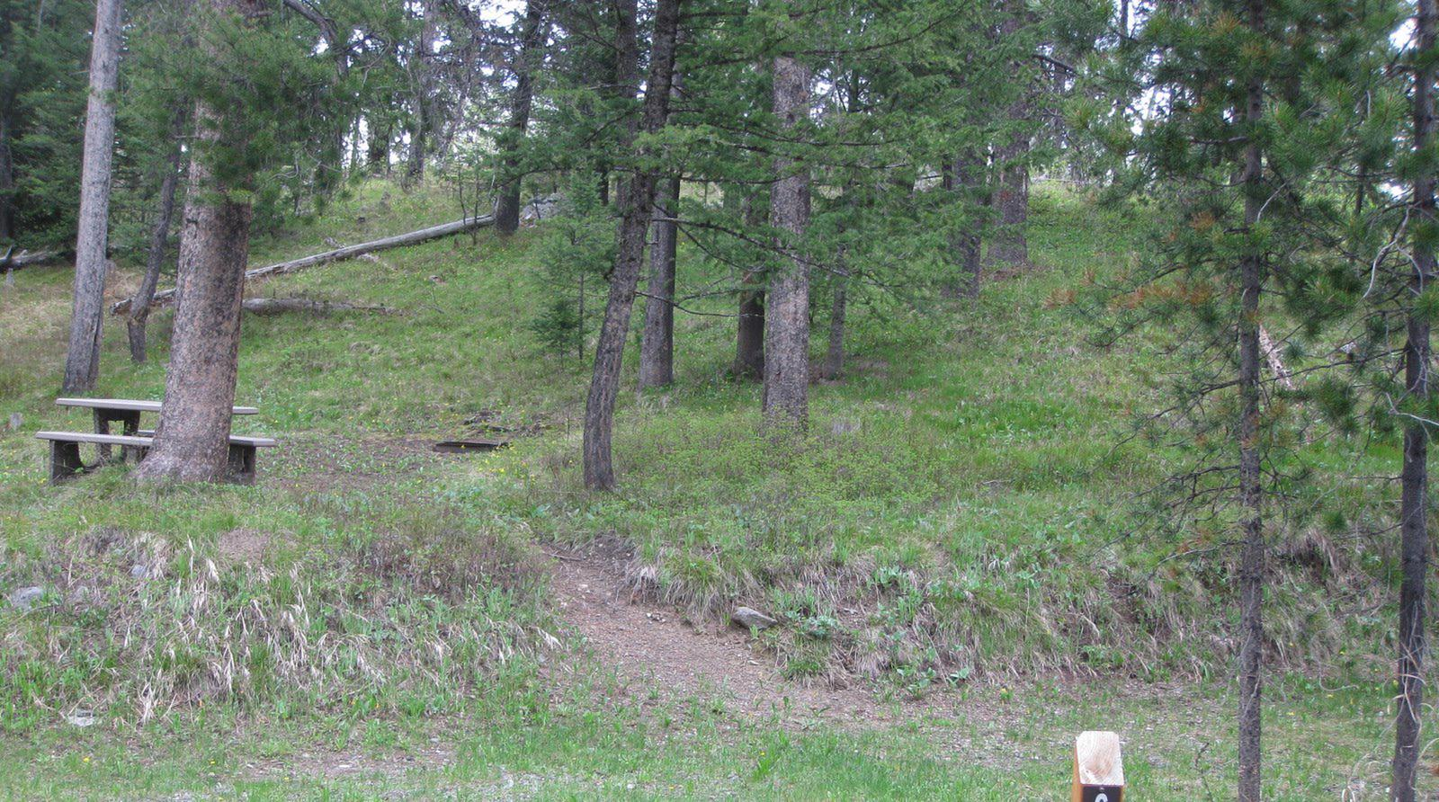Site C9, campsite surrounded by pine trees, picnic table & fire ringSite C9