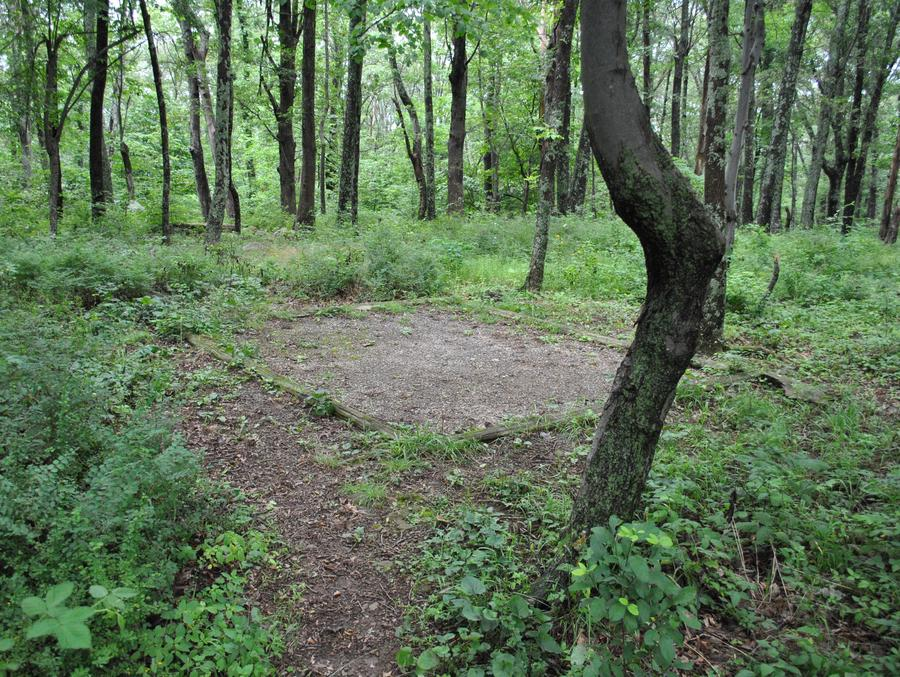 Mathews Arm Campground – Site A098 (Tent Pad)