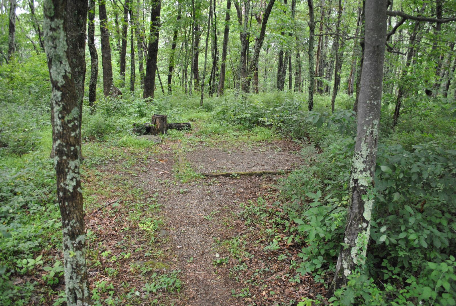 Mathews Arm Campground – Site A100 ( Tent Pad)
