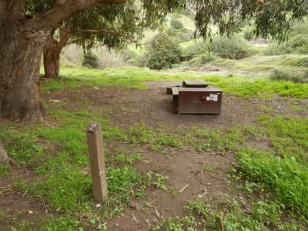 Campsite eucalyptus forested area with picnic table, food storage box, and campsite number.Lower Loop - 002