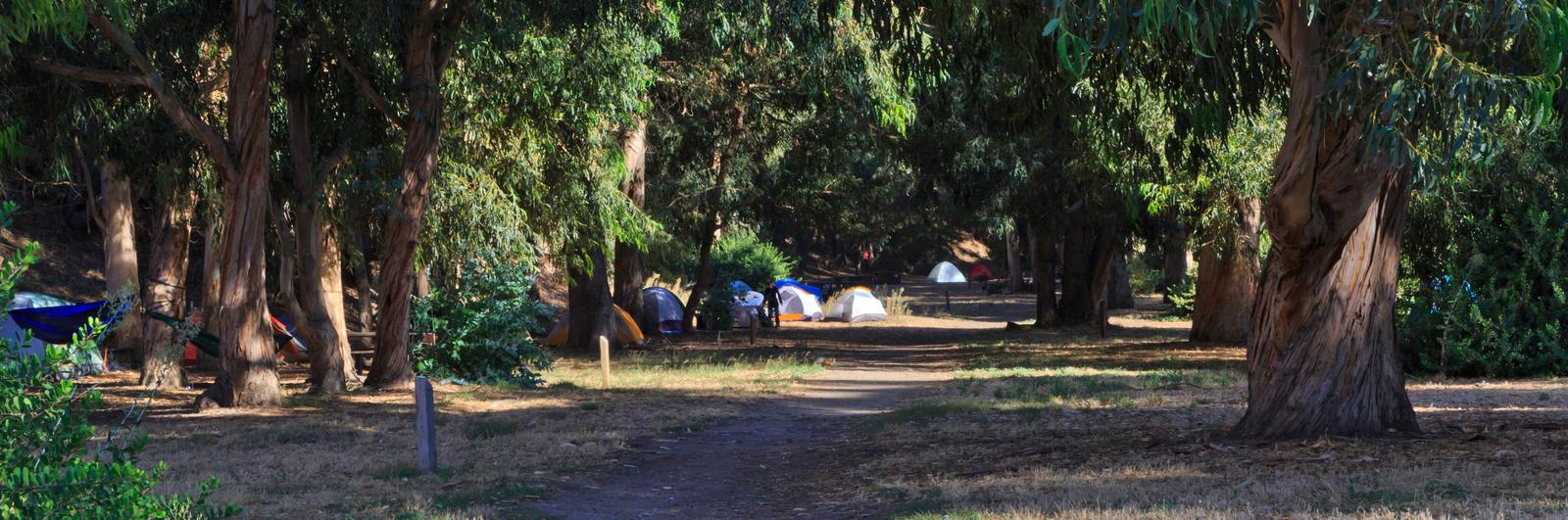 Tents in forested area.Scorpion campground