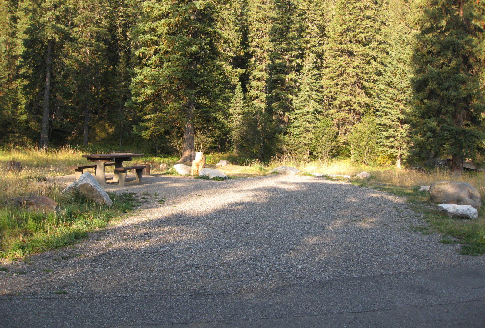 Site 8, campsite surrounded by pine trees, picnic table & fire ringSite 8
