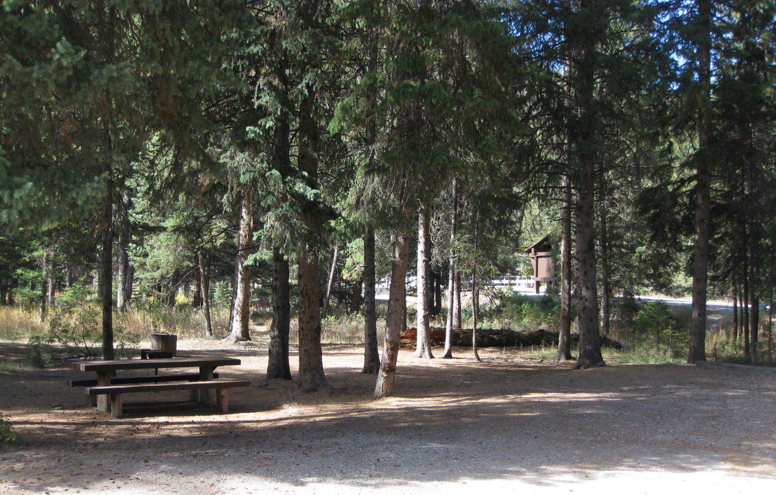 Site 3, campsite surrounded by pine trees, picnic table & fire ringSite 3