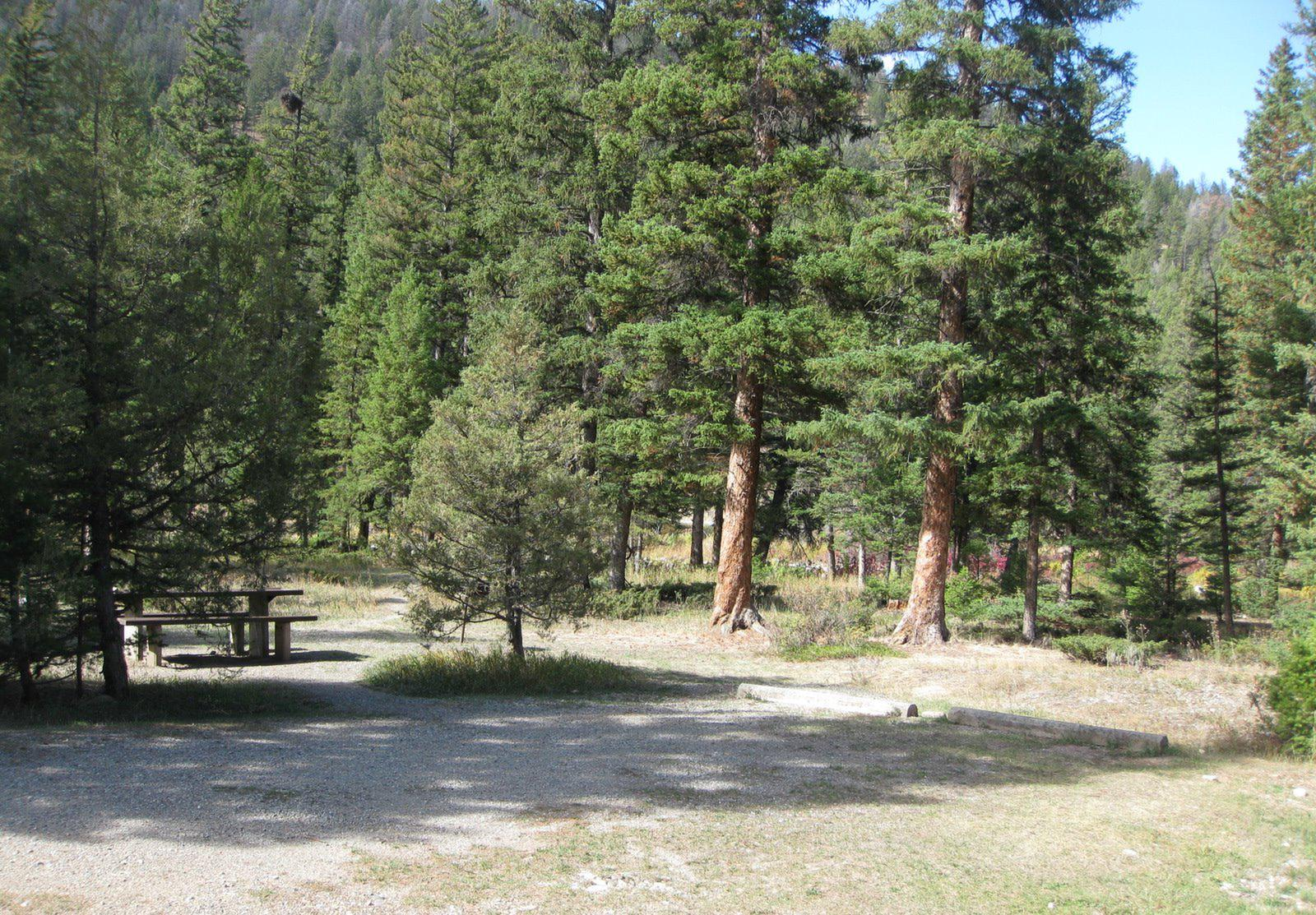 Site 17, campsite surrounded by pine trees, picnic table & fire ringSite 17