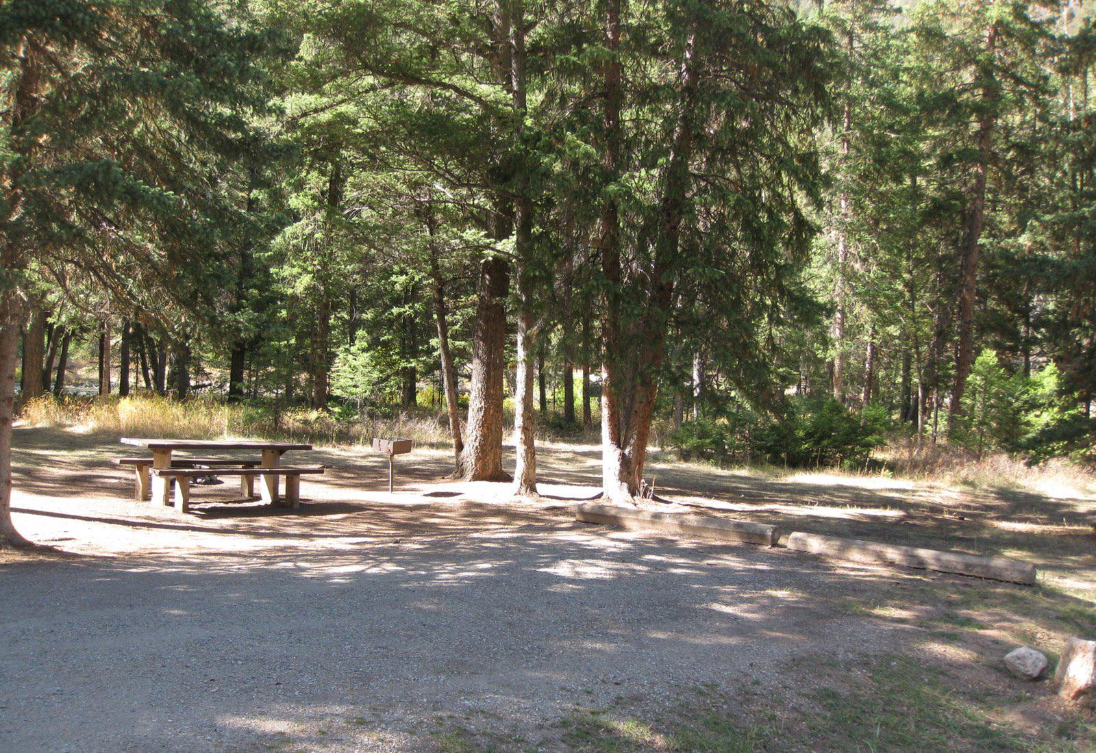 Site 25, campsite surrounded by pine trees, picnic table & fire ringSite 25