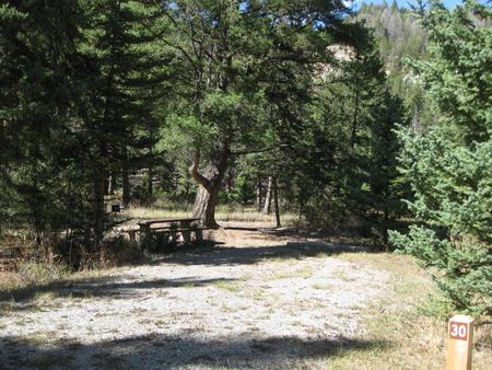 Site 30, campsite surrounded by pine trees, picnic table & fire ringSite 30