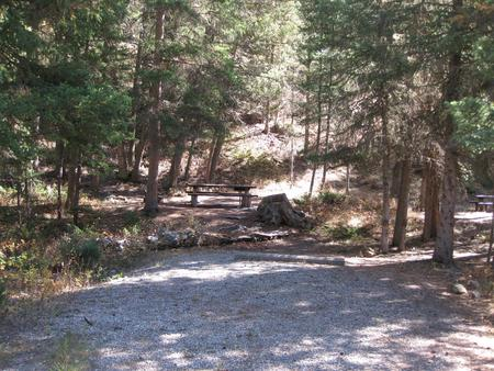 Site 31, campsite surrounded by pine trees, picnic table & fire ringSite 31