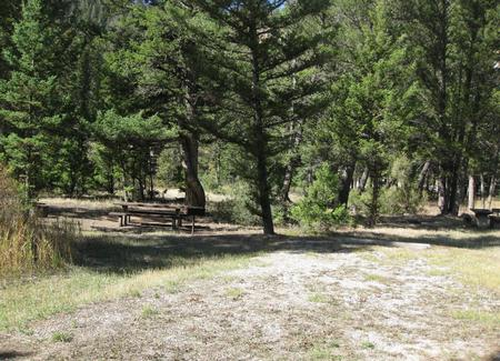 Site 32, campsite surrounded by pine trees, picnic table & fire ringSite 32