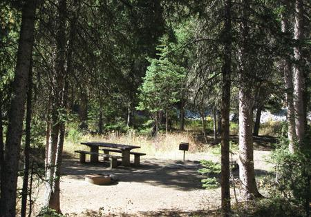Site 36, campsite surrounded by pine trees, picnic table & fire ringSite 36