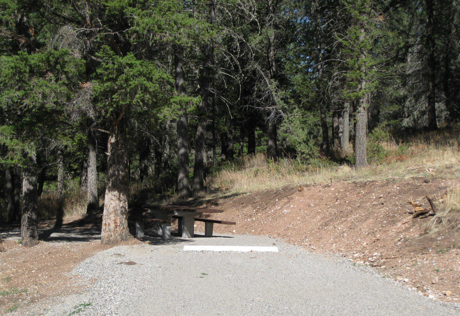 Site 48, campsite surrounded by pine trees, picnic table & fire ringSite 48