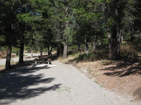 Site 49, campsite surrounded by pine trees, picnic table & fire ringSite 49