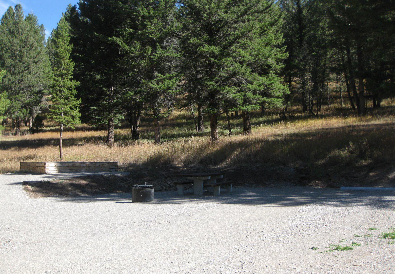 Site 51, campsite surrounded by pine trees, picnic table & fire ringSite 51