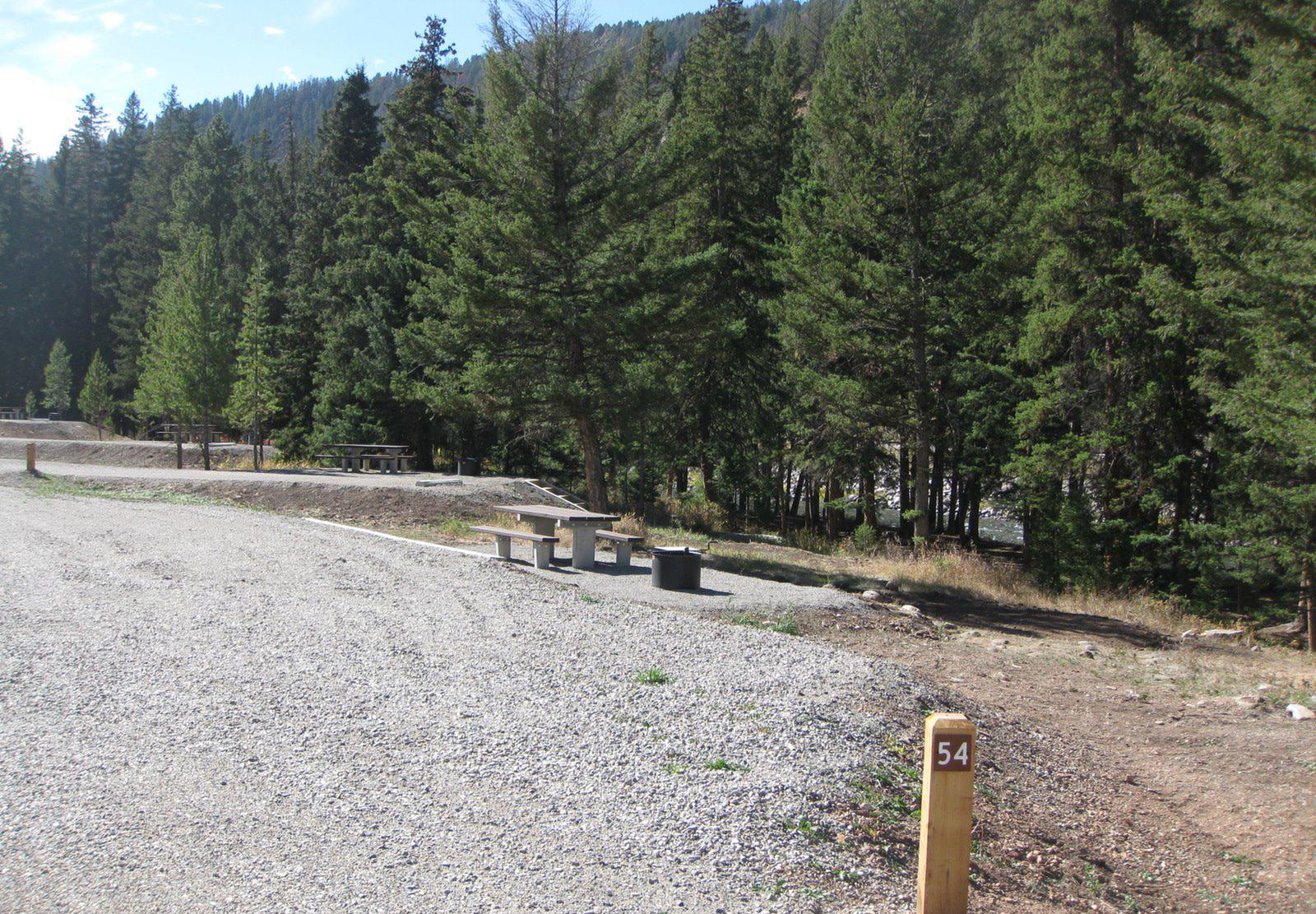 Site 54, campsite surrounded by pine trees, picnic table & fire ringSite 54