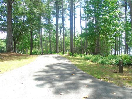 Campsite.Site 23