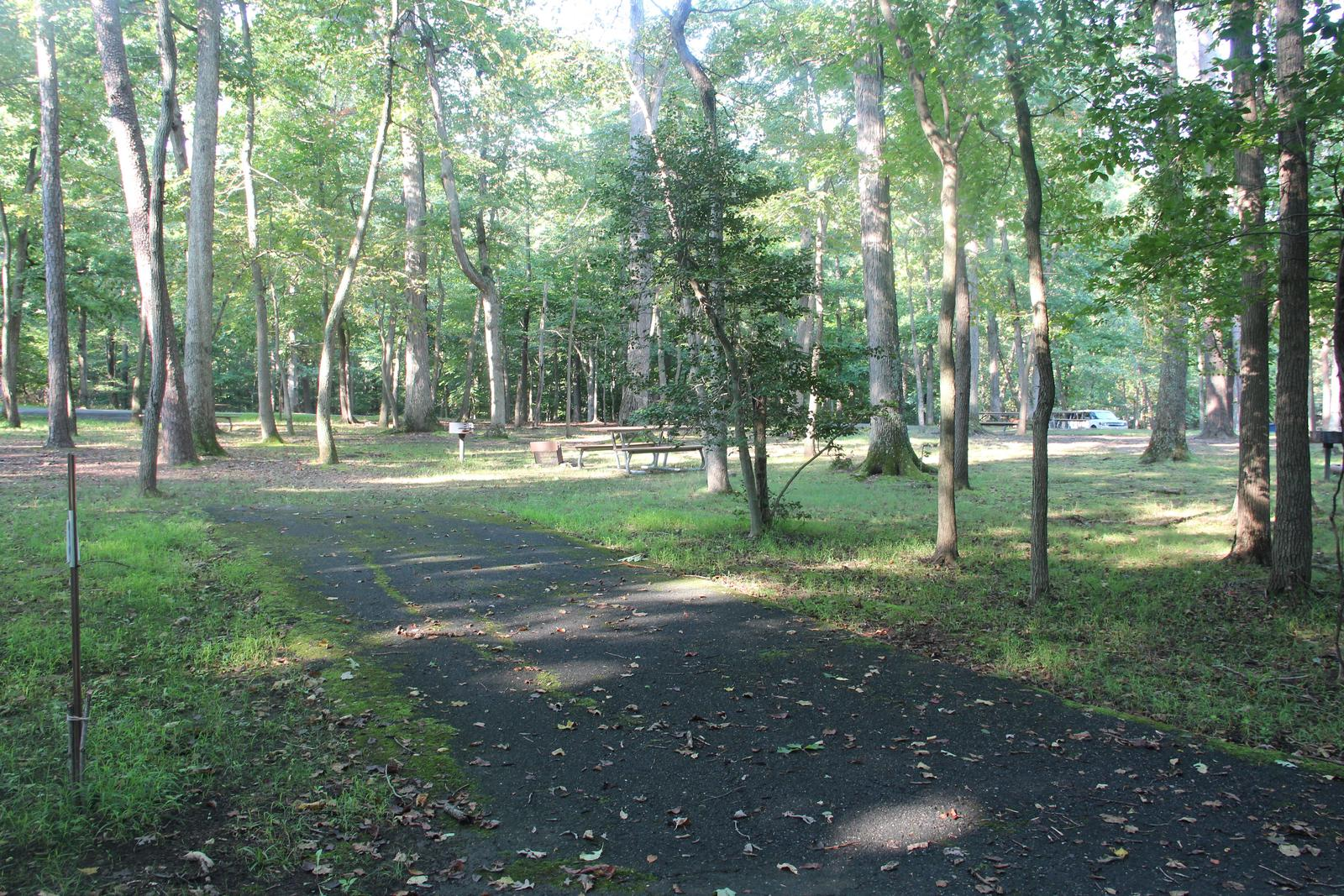 Greenbelt Park Campground C Loop Site 93