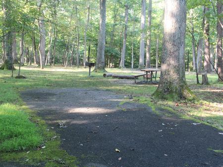 Greenbelt Park CampgroundC Loop Site 95
